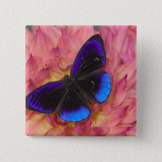 Sammamish Washington Photograph of Butterfly 18 15 Cm Square Badge