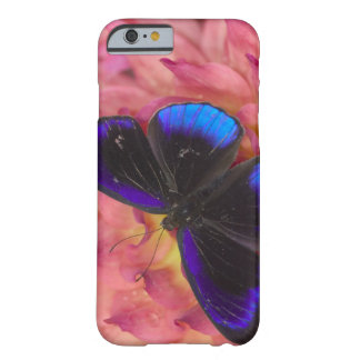 Sammamish Washington Photograph of Butterfly 18 Barely There iPhone 6 Case