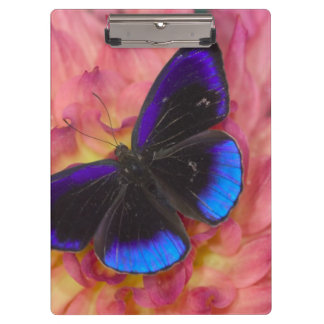 Sammamish Washington Photograph of Butterfly 18 Clipboard