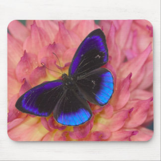Sammamish Washington Photograph of Butterfly 18 Mouse Mat