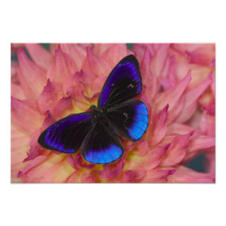 Sammamish Washington Photograph of Butterfly 18 Poster