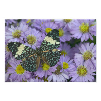 Sammamish Washington Photograph of Butterfly 19