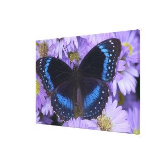 Sammamish Washington Photograph of Butterfly 19 Canvas Print