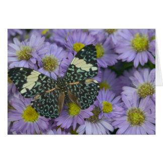 Sammamish Washington Photograph of Butterfly 19 Card