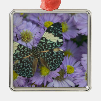 Sammamish Washington Photograph of Butterfly 19 Christmas Ornament