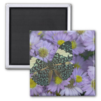 Sammamish Washington Photograph of Butterfly 19 Square Magnet