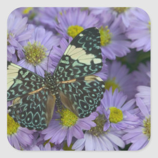 Sammamish Washington Photograph of Butterfly 19 Square Sticker