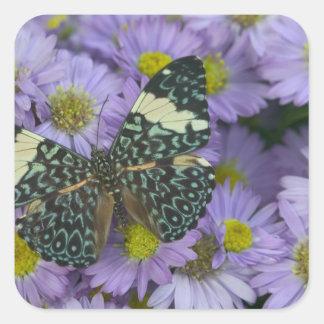 Sammamish Washington Photograph of Butterfly 19 Sticker