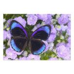 Sammamish Washington Photograph of Butterfly 2
