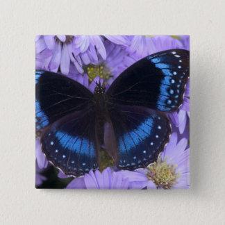 Sammamish Washington Photograph of Butterfly 20 15 Cm Square Badge