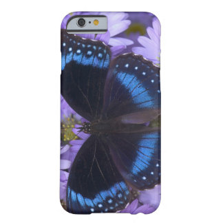 Sammamish Washington Photograph of Butterfly 20 Barely There iPhone 6 Case