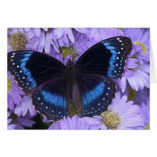 Sammamish Washington Photograph of Butterfly 20 Card