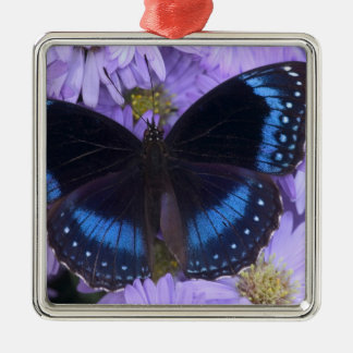 Sammamish Washington Photograph of Butterfly 20 Christmas Ornament