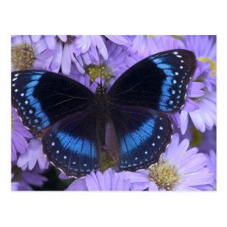 Sammamish Washington Photograph of Butterfly 20 Postcard