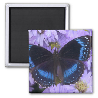 Sammamish Washington Photograph of Butterfly 20 Square Magnet