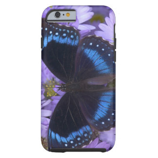 Sammamish Washington Photograph of Butterfly 20 Tough iPhone 6 Case