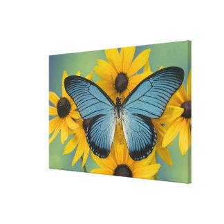 Sammamish Washington Photograph of Butterfly 21 Canvas Print