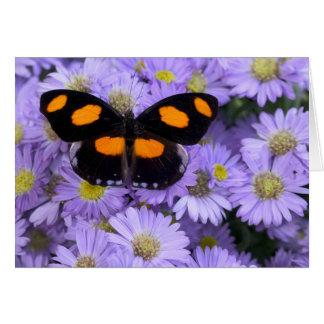Sammamish Washington Photograph of Butterfly 21 Card