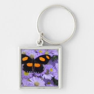 Sammamish Washington Photograph of Butterfly 21 Key Ring