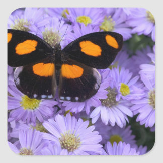 Sammamish Washington Photograph of Butterfly 21 Square Sticker