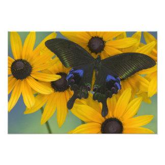 Sammamish Washington Photograph of Butterfly 22