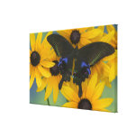 Sammamish Washington Photograph of Butterfly 22 Canvas Prints