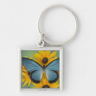 Sammamish Washington Photograph of Butterfly 22 Key Ring