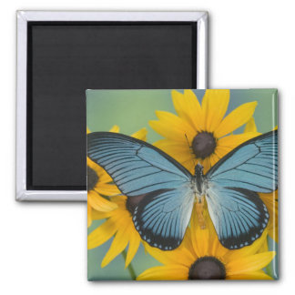 Sammamish Washington Photograph of Butterfly 22 Magnet