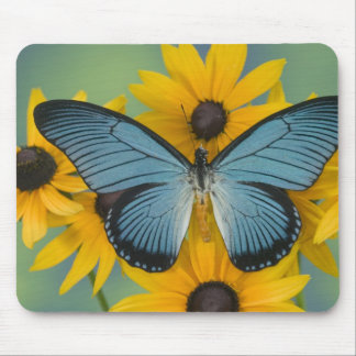 Sammamish Washington Photograph of Butterfly 22 Mouse Mat