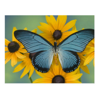 Sammamish Washington Photograph of Butterfly 22 Postcard