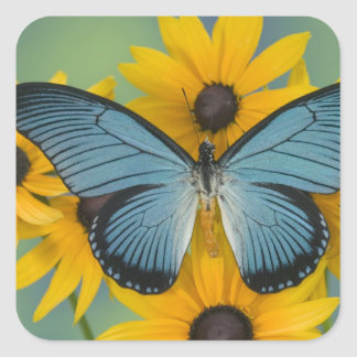Sammamish Washington Photograph of Butterfly 22 Square Sticker