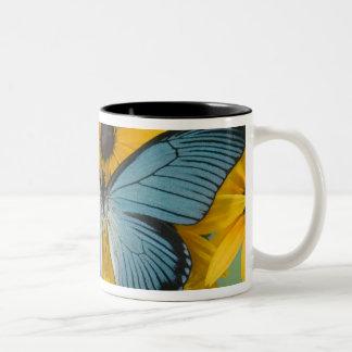 Sammamish Washington Photograph of Butterfly 22 Two-Tone Coffee Mug