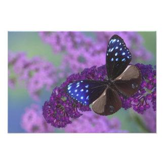 Sammamish Washington Photograph of Butterfly 23