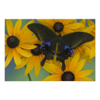 Sammamish Washington Photograph of Butterfly 23 Poster