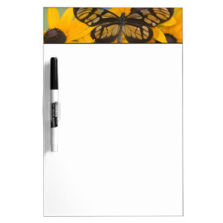 Sammamish Washington Photograph of Butterfly 24 Dry Erase Board