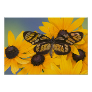 Sammamish Washington Photograph of Butterfly 24 Poster