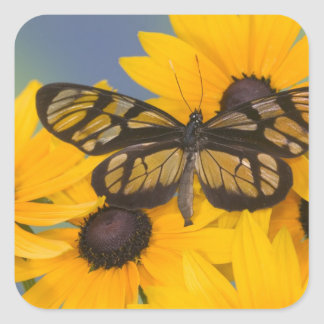 Sammamish Washington Photograph of Butterfly 24 Square Sticker