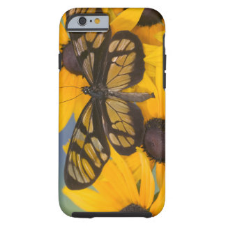 Sammamish Washington Photograph of Butterfly 24 Tough iPhone 6 Case