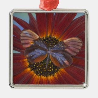 Sammamish Washington Photograph of Butterfly 25 Christmas Ornament