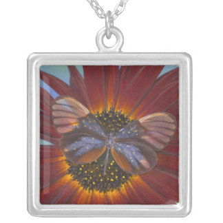Sammamish Washington Photograph of Butterfly 25 Silver Plated Necklace