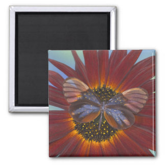 Sammamish Washington Photograph of Butterfly 25 Square Magnet
