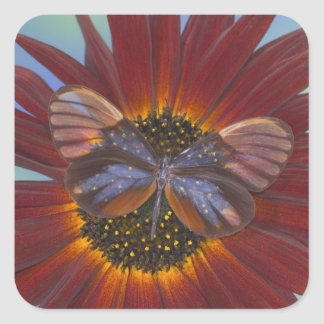 Sammamish Washington Photograph of Butterfly 25 Square Sticker