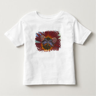 Sammamish Washington Photograph of Butterfly 25 Toddler T-Shirt