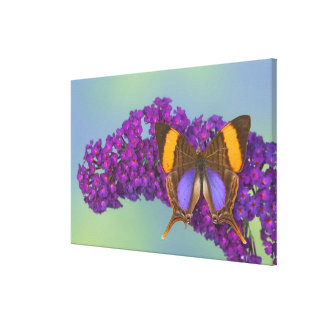 Sammamish Washington Photograph of Butterfly 26 Canvas Print