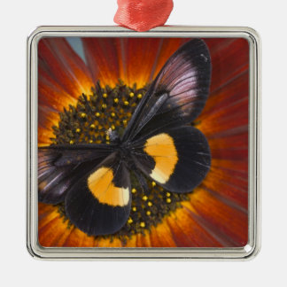 Sammamish Washington Photograph of Butterfly 26 Christmas Ornament