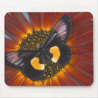 Sammamish Washington Photograph of Butterfly 26 Mouse Mat