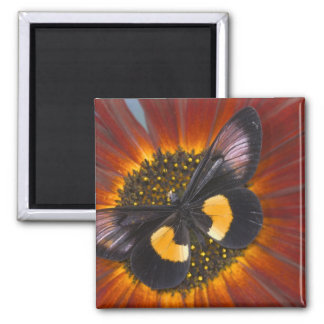 Sammamish Washington Photograph of Butterfly 26 Square Magnet