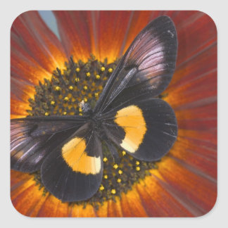 Sammamish Washington Photograph of Butterfly 26 Square Sticker