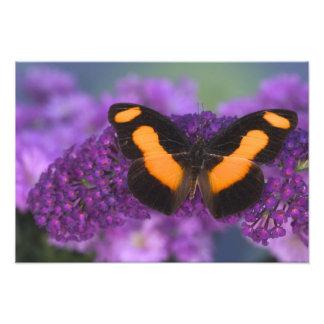 Sammamish Washington Photograph of Butterfly 27