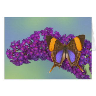 Sammamish Washington Photograph of Butterfly 27 Card